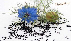 گیاه سیاه دانه
