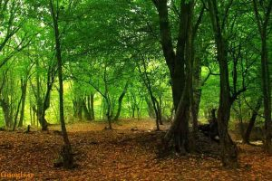 مکان های دیدنی ایران - پارک ملی گلستان