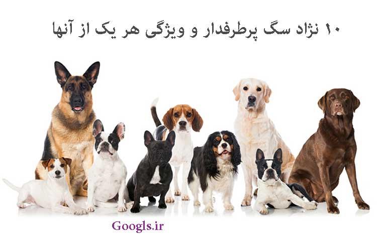 نژاد سگ